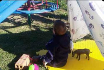 Imagem 1. Construção de cabana e interação com brinquedos ao ar livre. (Ciudad de Chapecó, 2018). Fonte: Acervo do autor.