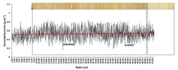 Perfil radial de la densidad aparente del leño de los árboles de A. cearensis. Tendencias de crecimiento y diferenciación del duramen y la albura en el perfil.