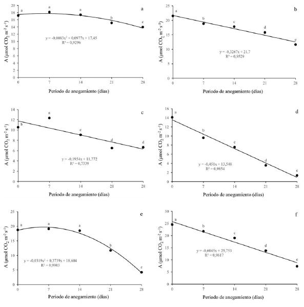 Efecto de diferentes periodos de anegamiento sobre la tasa fotosintética (A) en plantas de (a) Q. humboldtii, (b) J. neotropica, (c) F. tequendamae, (d) D. coerulea, (e) D. viscosa, (f) S. viarum. Promedios seguidos de letras iguales no presentan diferencias estadísticas de acuerdo con la prueba de Tukey (5%).