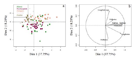 Análisis de componentes principales para las variables medidas en las estacas. Se presentan los individuos de cada especie (a) y las variables (b) sobre el plano factorial. LongBrotes: longitud del brote más largo (cm), LongRaizLarga: longitud de la raíz más larga (cm), NoBrotes: número de brotes, NoHojas: número de hojas, NoRaices: número de raíces, NoRam: número de ramificaciones en una muestra de raíz de 3 cm y NoZarcillos: número de zarcillos.