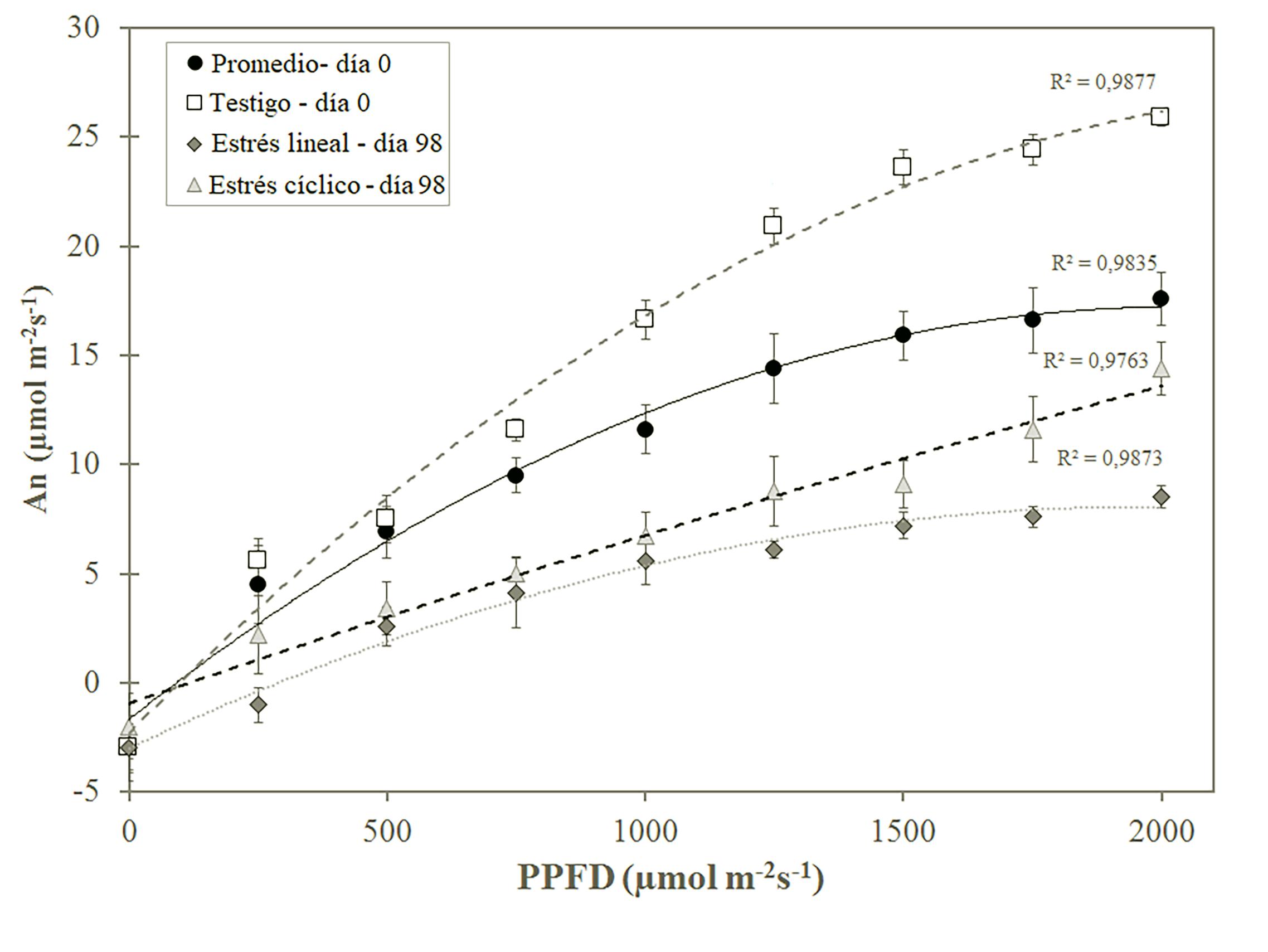 Curvas de Asimilación fotosintética neta (An) con respecto a la Photosynthetic Photon Flux Density (PPFD), obtenida en día 0 y día 98 en plantas de G. sepium bajo tres tratamientos de estrés hídrico en condiciones de invernadero.