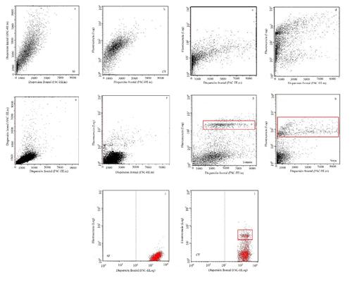 Gráficos de dispersión de la población de núcleos de diferentes especies vegetales de acuerdo con el tipo de buffer de extracción empleado. a) Buffer OTTO con muestra de melina sin fluorescencia, SF) y b) con fluorescencia, CF; c) Buffer Lutz con muestra de melina sin fluorescencia y d) con fluorescencia; e) Buffer Loureiro con muestras de melina sin fluorescencia y f) con fluorescencia; g) Buffer LB01 con muestra de núcleos de tomate y h) de soya, ambas analizadas con fluorescencia; i) Muestra de melina con buffer LB01 sin agente fluorescente y j) con agente fluorescente. En los recuadros se denotan las poblaciones de núcleos intactos correspondientes a los picos de fluorescencia emitida.