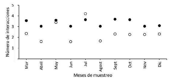 Número de interacciones mensuales de la red del bosque andino restaurado (circulo blanco) y de referencia (círculo negro), en el parque ecológico La Poma, Cundinamarca, donde se muestra en número de interacciones entre plantas ornitócoras y aves frugívoras en cada lugar.