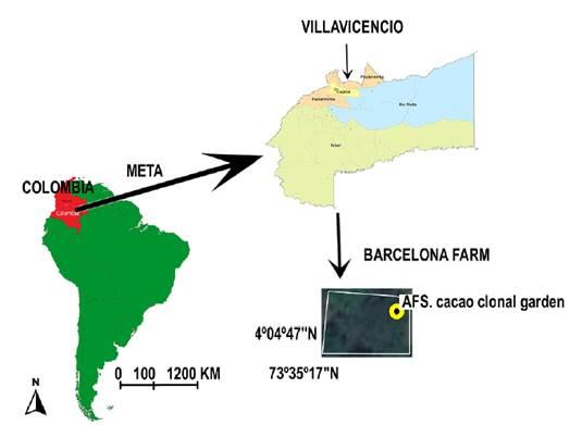 Close photo location of AFS T. cacao clonal garden at Barcelona farm, Unillanos University, Villavicencio city, Meta state, Colombia.