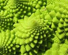 Espirales de Fibonacci.