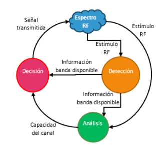 Ciclo cognitivo en CR.