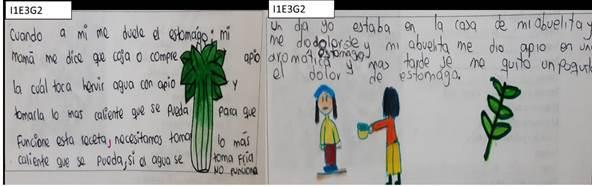 Ejemplo de las respuestas de los estudiantes frente al origen de sus saberes acerca de las plantas.