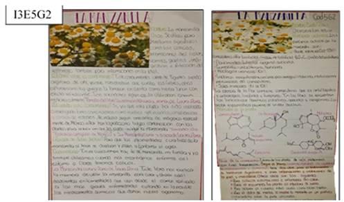 Lamina ilustrativa que describe las propiedades medicinales de la manzanilla.
